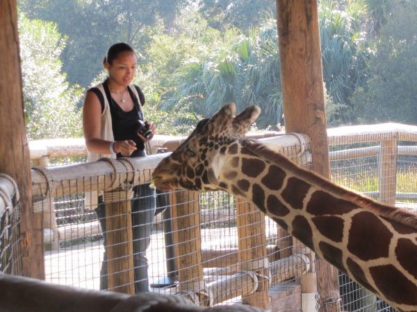 Jacksonville Zoo Giraffe Overlook