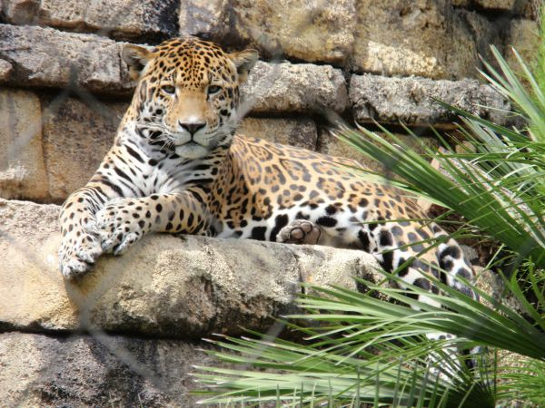 11 best places for family fun in Jacksonville - zoo