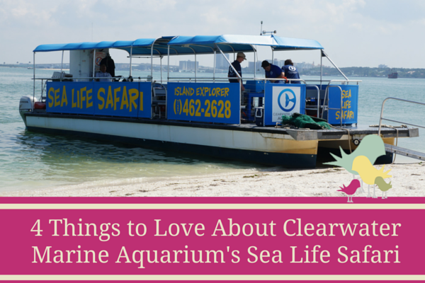 4 Things to Love About Clearwater Marine - blog pic
