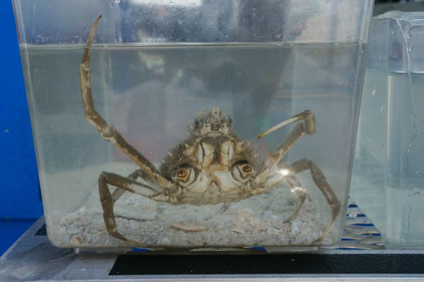 Sea Life Safari Clearwater Marine Aquarium - Crab
