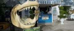 Things to Do Key West Aquarium