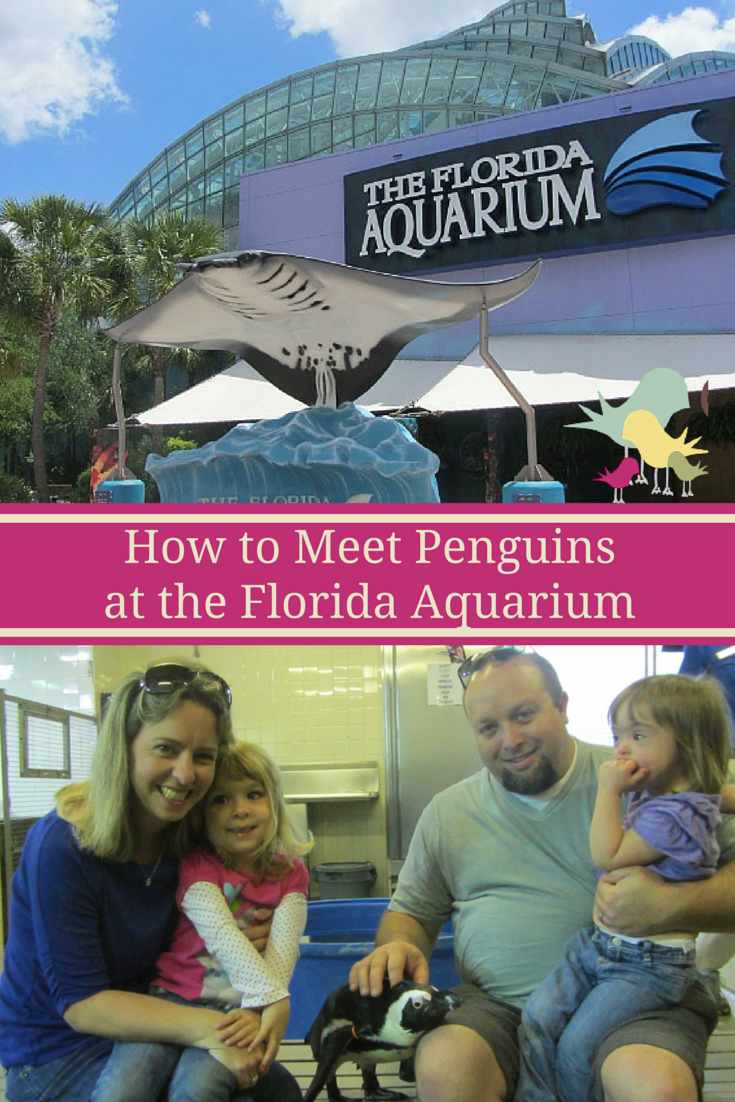 Learn How to Meet Penguins at The Florida Aquarium