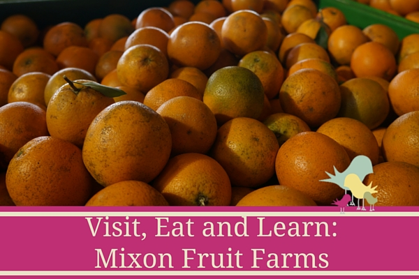 Mixon Fruit Farms - Bradenton