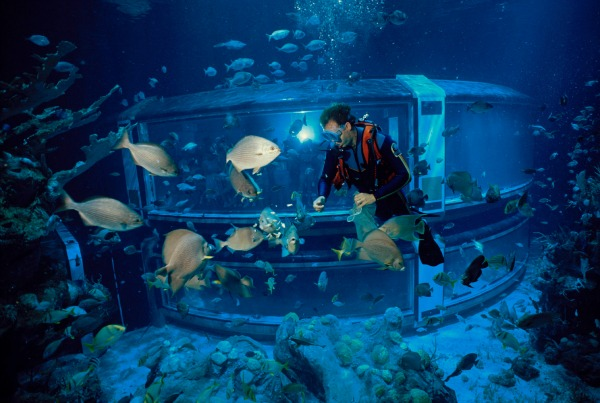 The Seas with Scuba Diver credit WDW
