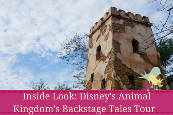 Inside Look- Disney's Animal Kingdom's Backstage Tales Tour