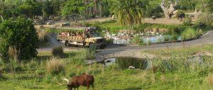 Disney's Animal Kingdom - Kilimanjaro Safari