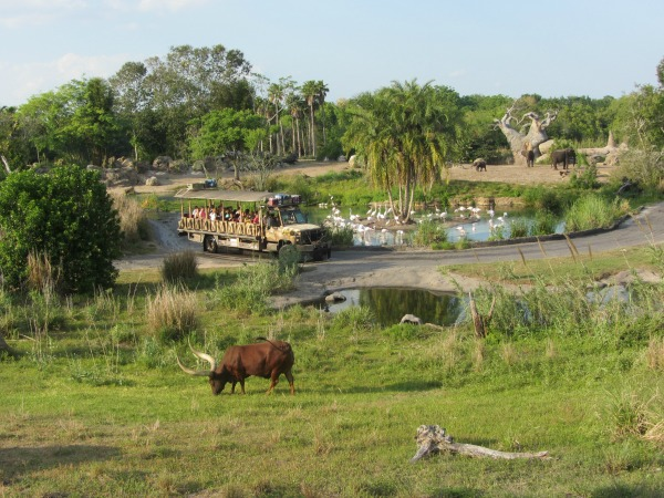 Image of: Orlando Disneys Animal Kingdom Kilimanjaro Safari Carrie On Travel Why Love Disneys Animal Kingdom and You Should Too Carrie