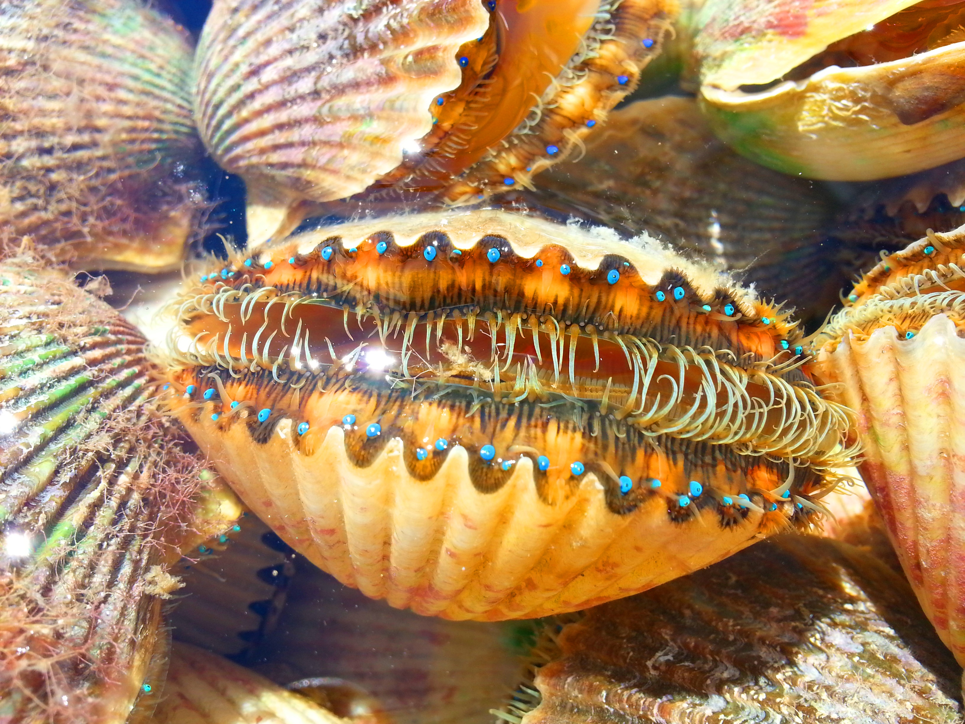 Scalloping in Florida? Stay at Plantation on Crystal River ...