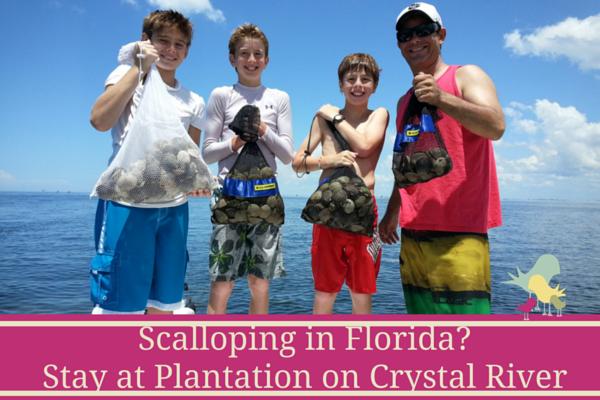 scalloping in florida - blog