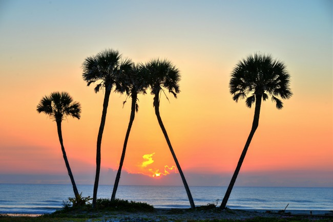 palm-trees-credit-daytona-beach-cvb