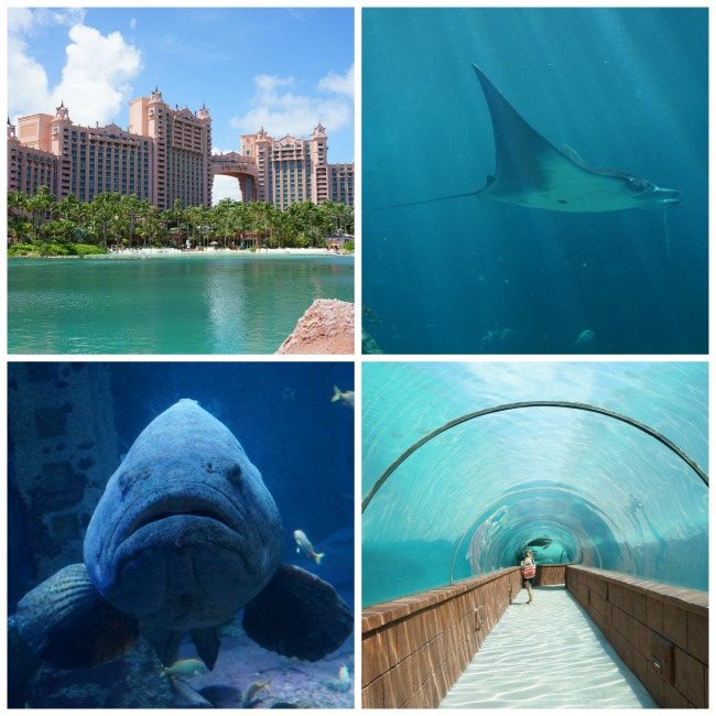 Atlantis Bahamas Collage