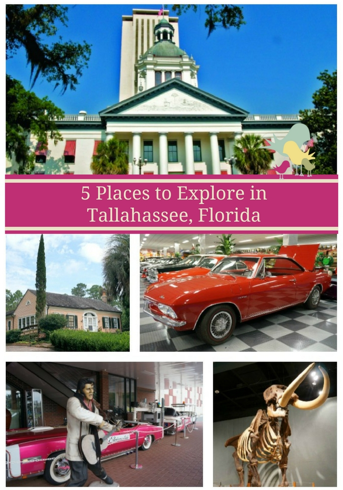 5 Places to Explore in Tallahassee, Florida  #travel #florida