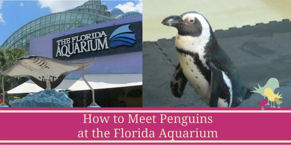 penguins-florida-aquarium-blog.png