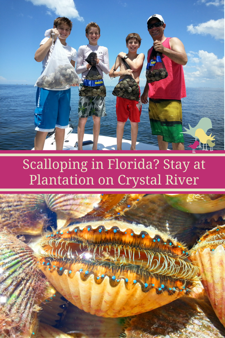 Scalloping in Florida? Stay at Plantation on Crystal River
