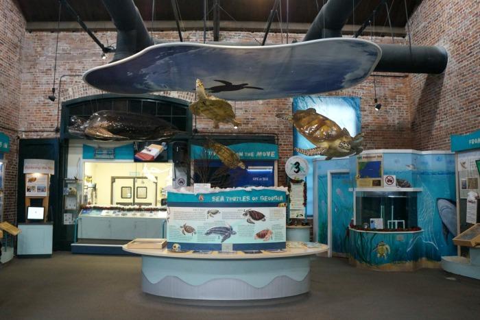 Georgia Sea Turtle Center - Interior